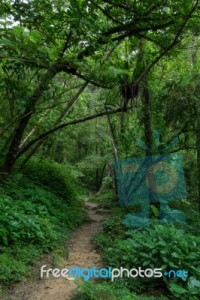 path-in-a-lush-and-verdant-forest-100239537